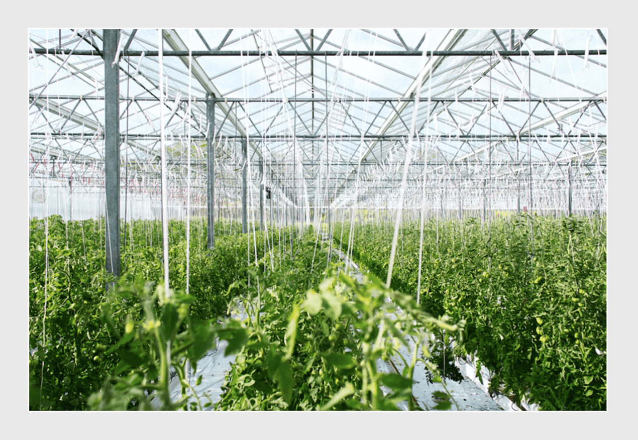 agriculture software development